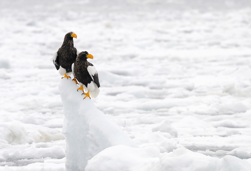 Alone on the ice. Harry Eggens